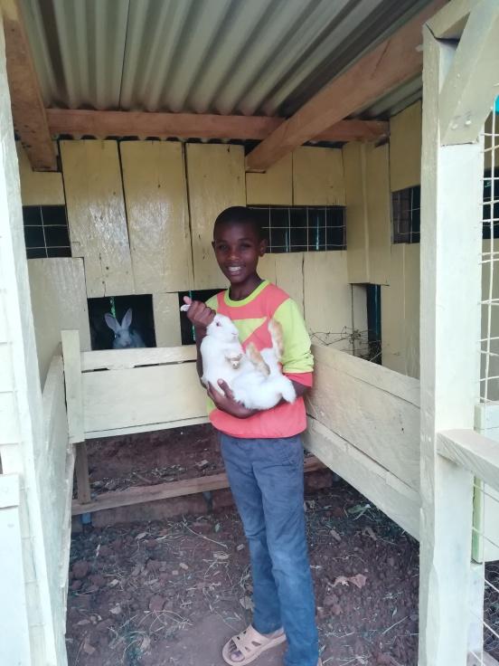 Hodowla królików dla Centrum Dziecięcego w Kithatu (Kenia)