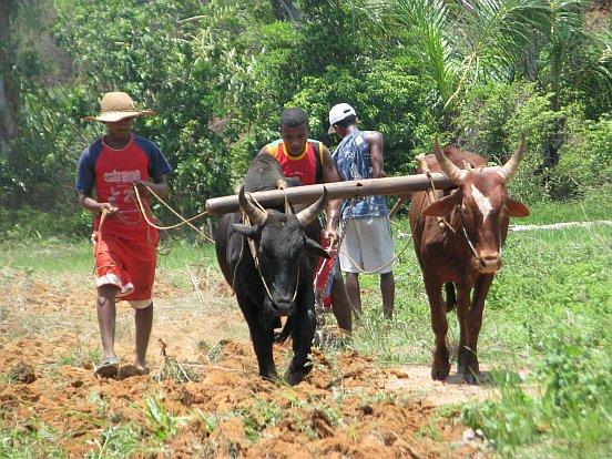 Rolnictwo na Madagaskarze
