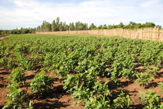 Rozbudowa fermy rolniczej w Mahitsy (Madagaskar)