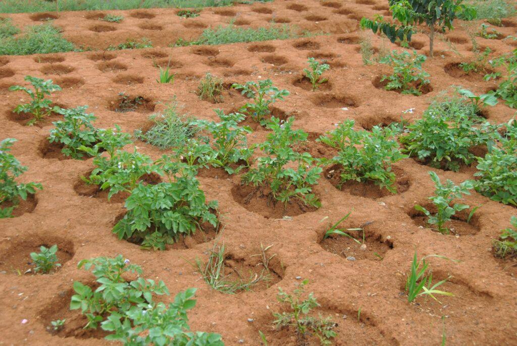 Zaprzęg dla fermy edukacyjnej w Anivorano (Madagaskar)